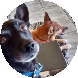 Dingo e Pikachu