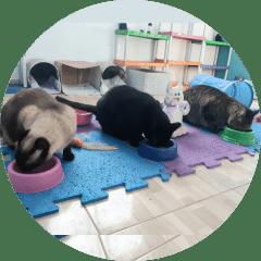 Gatos Cartola, Amoro e Pantera
