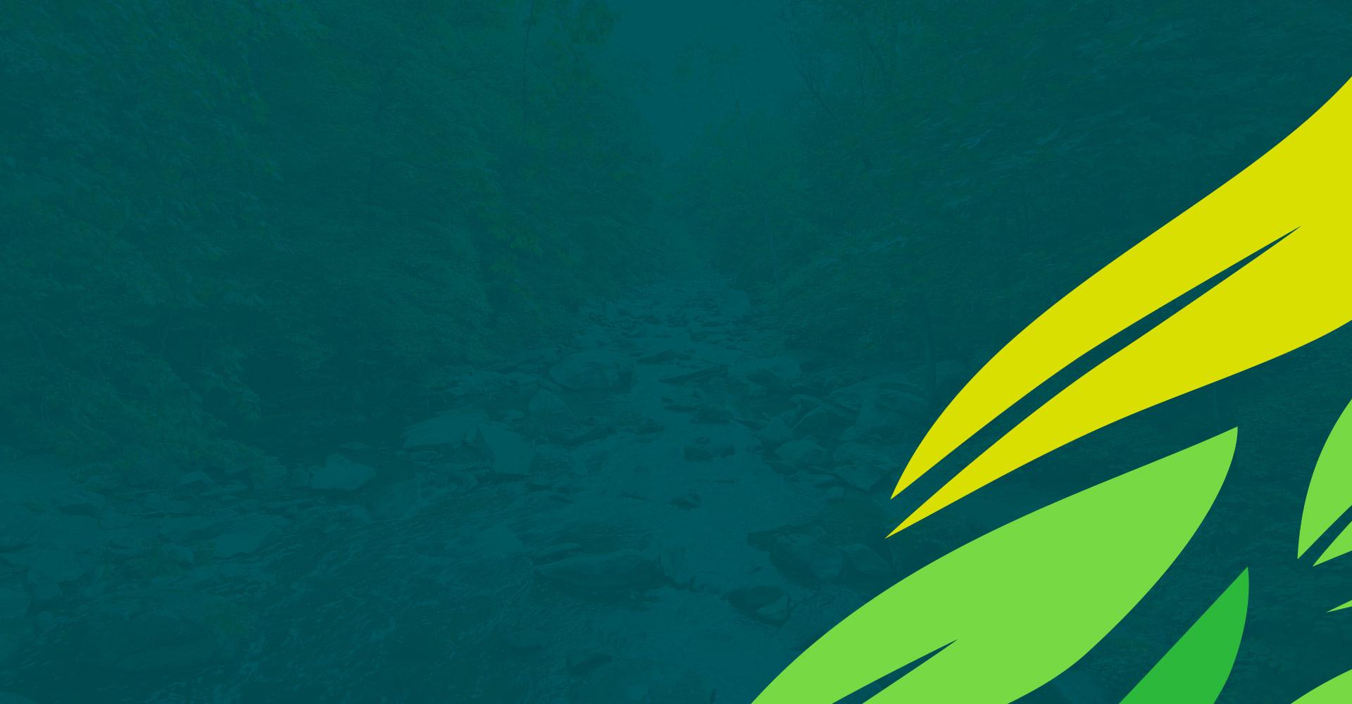 Água da Mata -  Desenvolvendo sustentabilidade para uma agricultura melhor.