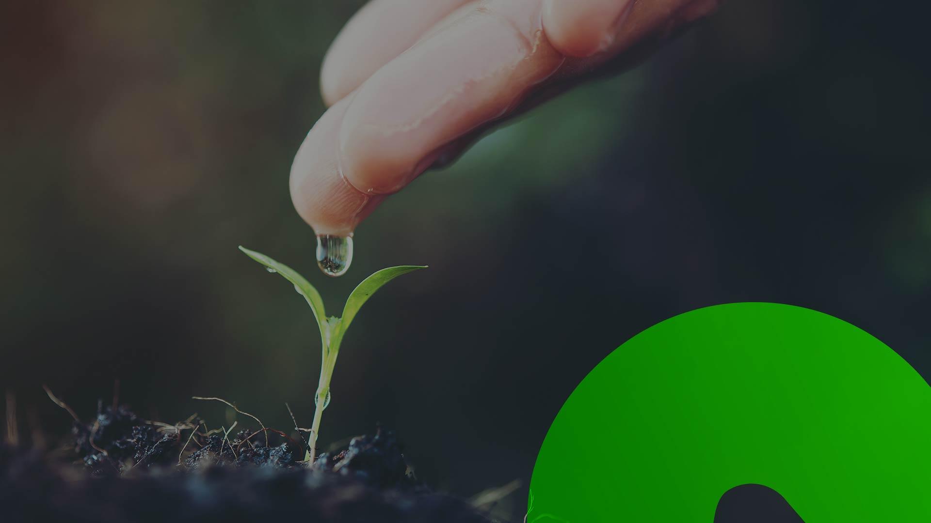 Quando descartadas, podem virar adubo a partir da compostagem ou energia através de biodigestores