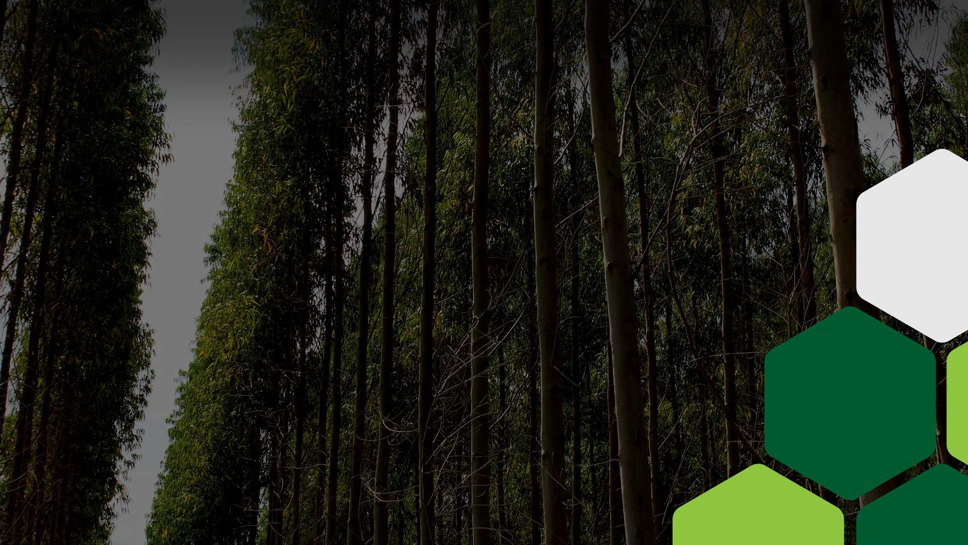 Excelência em altas produtividades em florestas comerciais