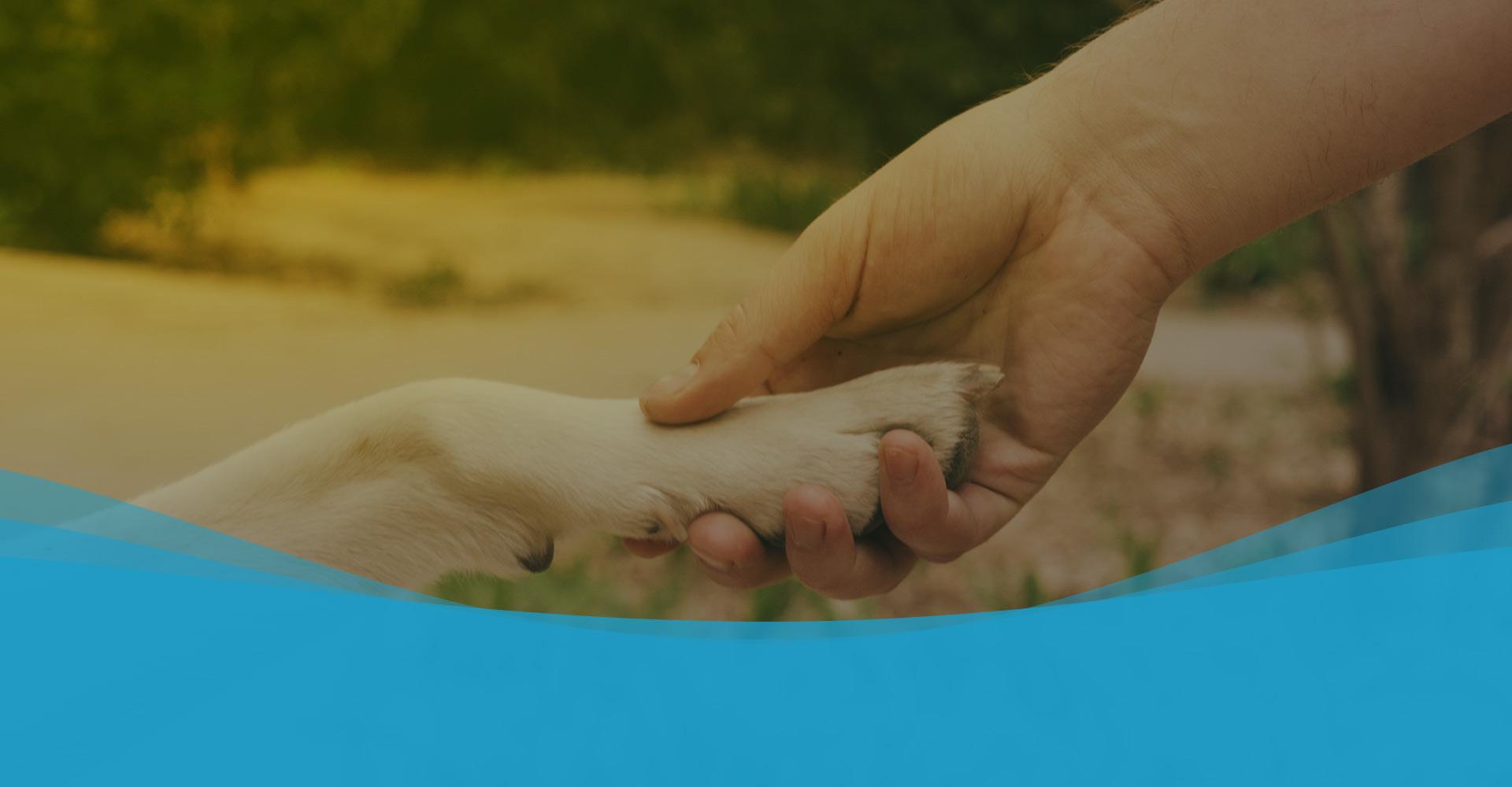 ConceitoVet<br>Centro Veterinário 24 horas com estrutura completa para o melhor cuidado do seu animal.